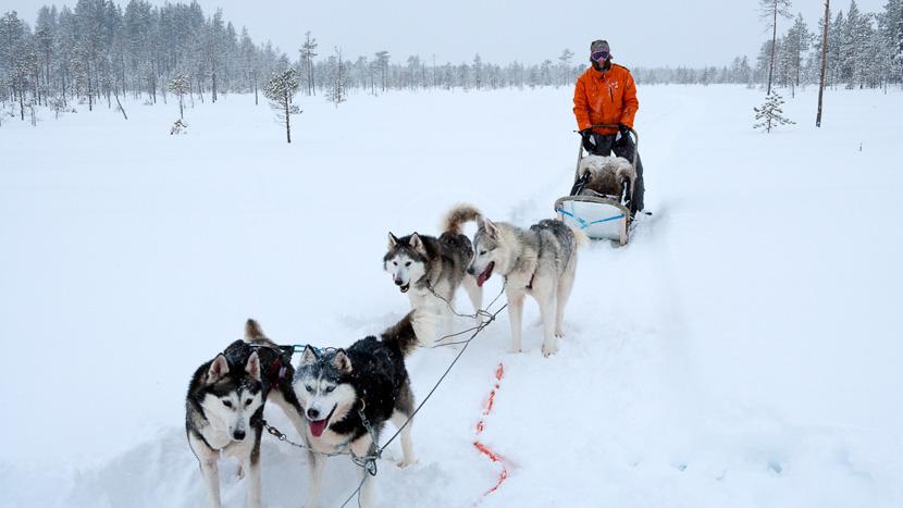 Randonnée en traineau à chiens, Plongée en Mer Blanche, Russie