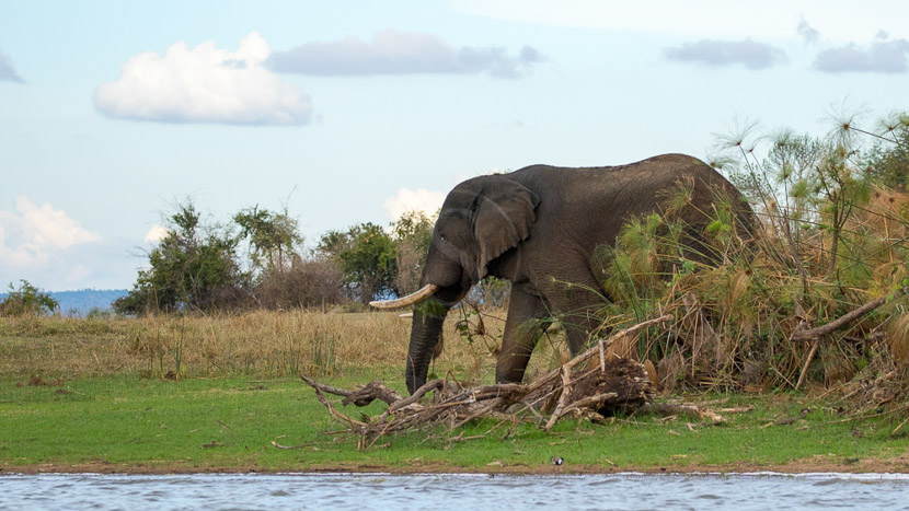Parc national de l'Akagera, Parc de Akagera, Rwanda