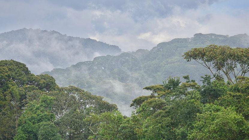 Parc national de Nyungwe, Forêt de Nyungwe, Rwanda