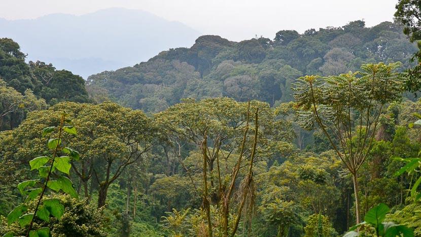 Parc national de Nyungwe, Safari au Rwanda © Julien M.