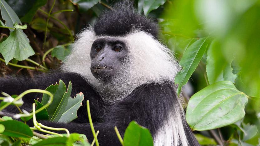 Trek chimpanzés dans le parc national de Nyungwe, Safari au Rwanda © Julien M.