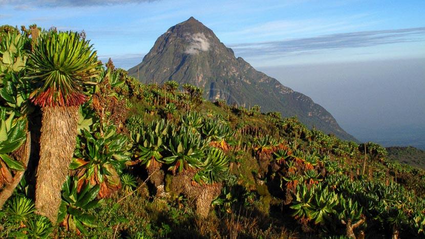 Parc national des volcans,