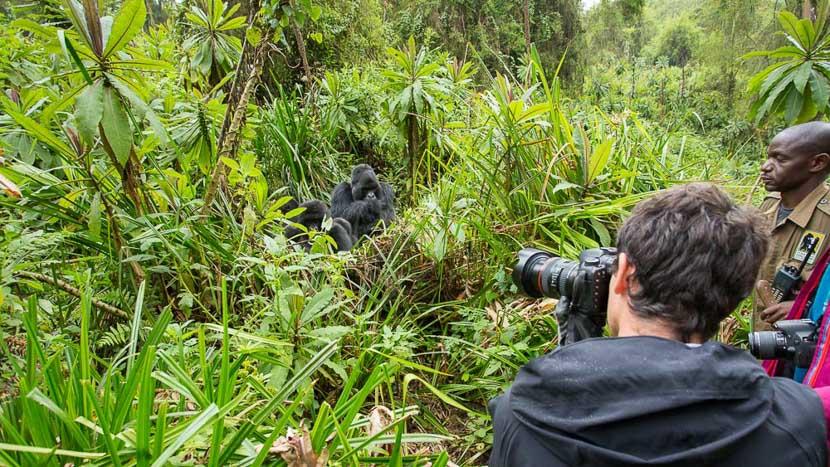 Trek gorilles au Parc des volcans, Parc des volcans, Rwanda © Etendues Sauvages