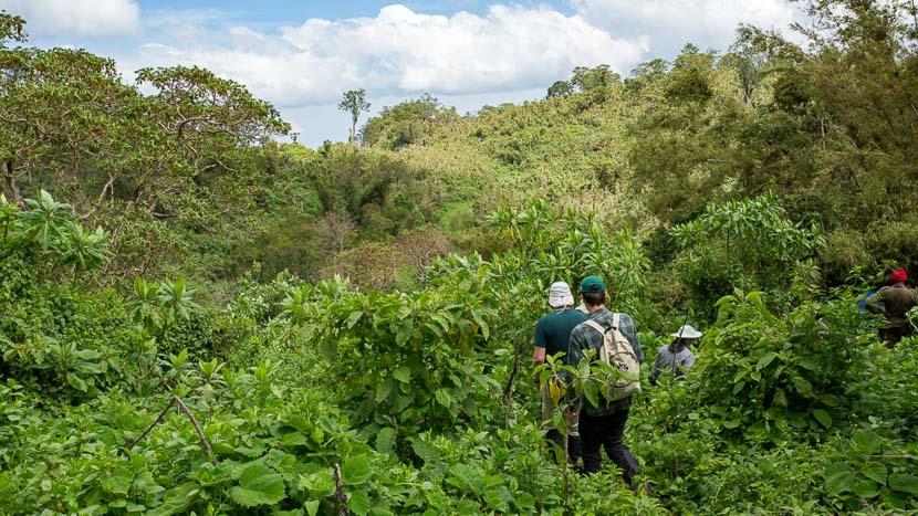 Excursion vers la tombe de Dian Fossey, Parc des volcans, Rwanda © Etendues Sauvages