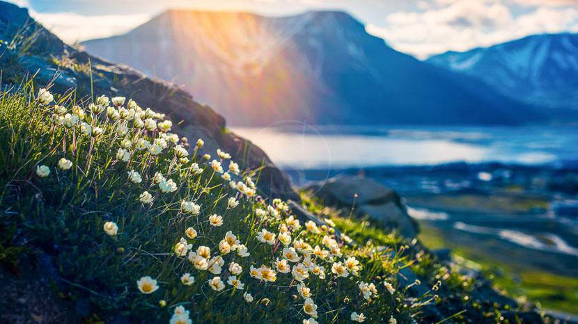 Tour du Spitzberg et île Blanche, Découverte du Spitzberg, Norvège