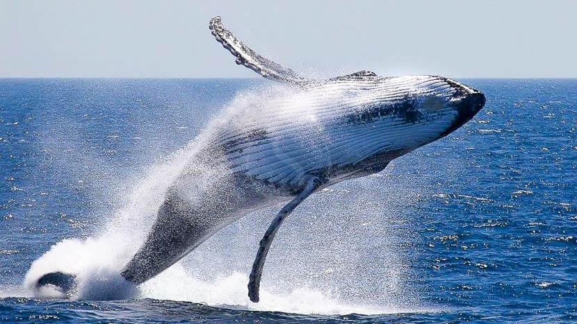 Observation des baleines, Bar Reef Resort à Kalpitiya, Sri Lanka © Gilles Georget