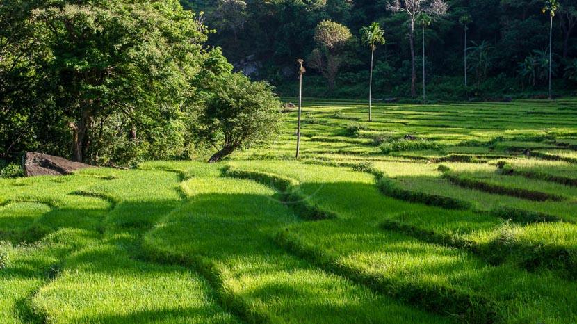 Randonner dans les Knuckles, Knuckles Forest Reserve, Sri Lanka © Shutterstock