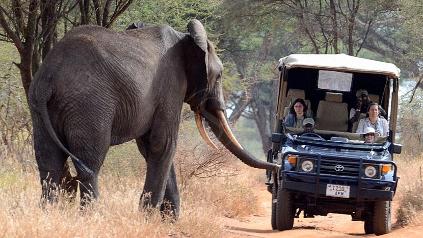 L'exclusivité en camp mobile de luxe, Ambiances de safari, Tanzanie