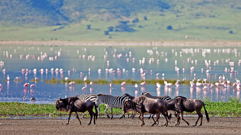 Exploration du cratère de l'Empakaai, The Highlands Ngorongoro, Tanzanie © Asilia