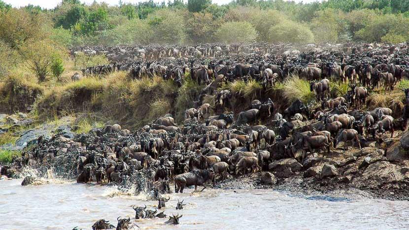 La grande migration du Serengeti, Safari en Tanzanie © &Beyond