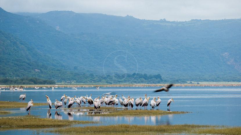 Parc national de Manyara, Lake Manyara Tree Lodge, Tanzanie © &Beyond