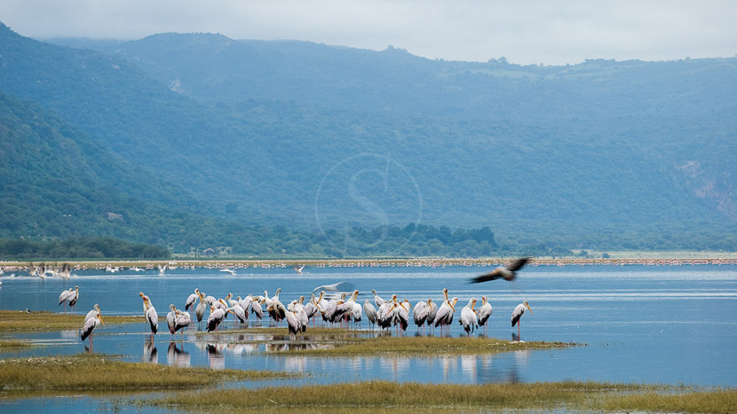 Observation des flamants roses au lac Manyara, Lake Manyara Tree Lodge, Tanzanie © &Beyond
