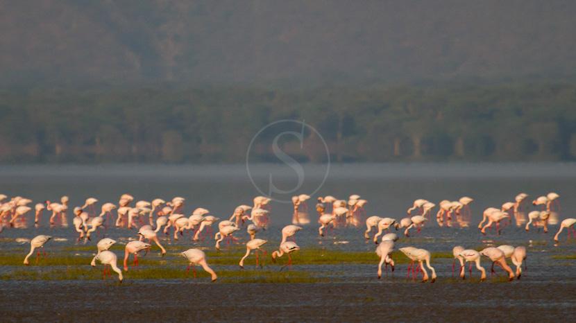 Observation des flamants roses au lac Manyara, Chem Chem Lodge Tarangire, Tanzanie © Chem Chem