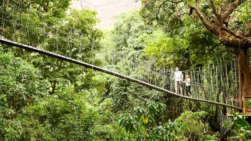 Ponts suspendus dans la forêt du lac Manyara, Ponts suspendus à Manyara, Tanzanie