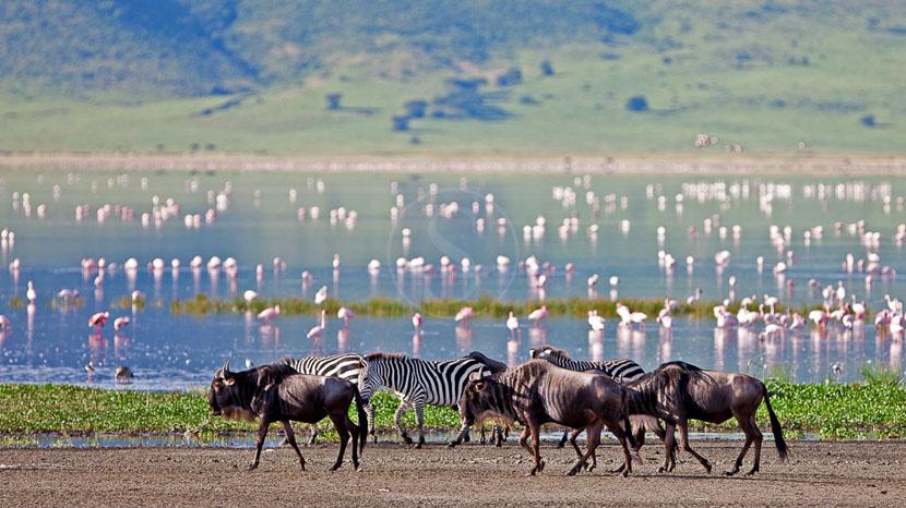 Cratère du Ngorongoro, The Highlands Ngorongoro, Tanzanie © Asilia