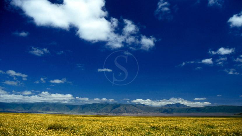 Cratère du Ngorongoro, Safari dans le cratère du Ngorongoro, Tanzanie