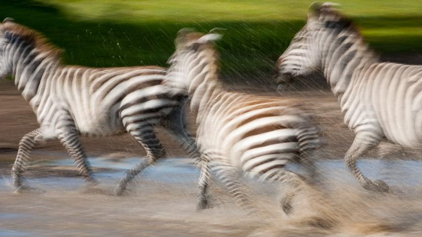 Zone de conservation du Ngorongoro, Safari vers Ndutu, Tanzanie