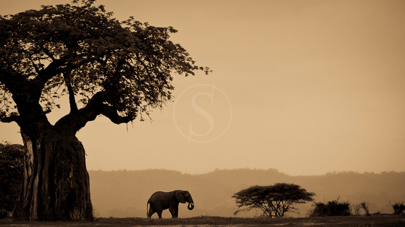 Parc national de Ruaha, Kwihala Camp à Ruaha, Tanzanie © Asilia - Marius Swart