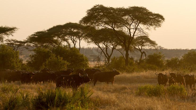 Safari à pied à Ruaha, Safari à Ruaha, Tanzanie