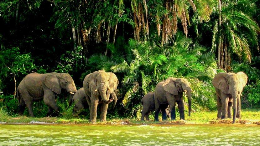 Rubondo Island, Rubondo Island, Tanzanie © Asilia - Anton Crone