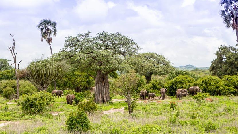 Rubondo Island, Rubondo Island, Tanzanie © Asilia - Tracey Van Wijk