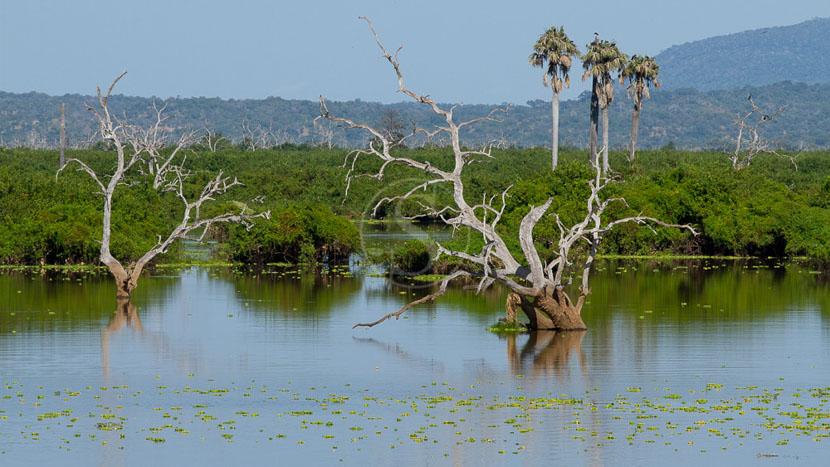 Safari en bateau dans la réserve animalière de Selous, Safari à Sélous, Tanzanie