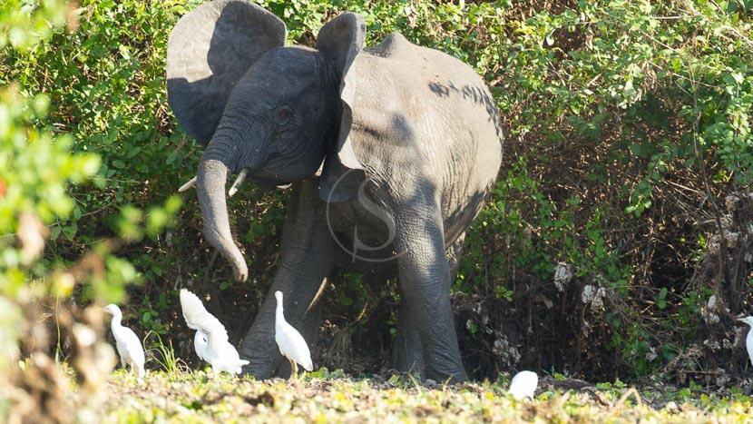 Coucher de soleil sur le Rufiji, Safari à Sélous, Tanzanie