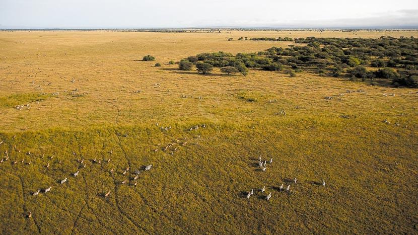 Parc national du Serengeti, Safari en ballon dans le Serengeti, Tanzanie © Singita