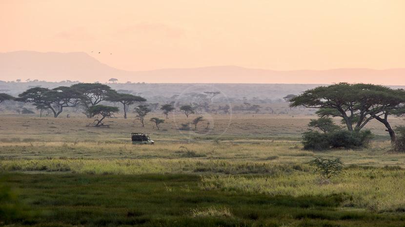 Parc national du Serengeti, Namiri Plains Camp, Tanzanie © Asilia - Paul Joynson Hicks