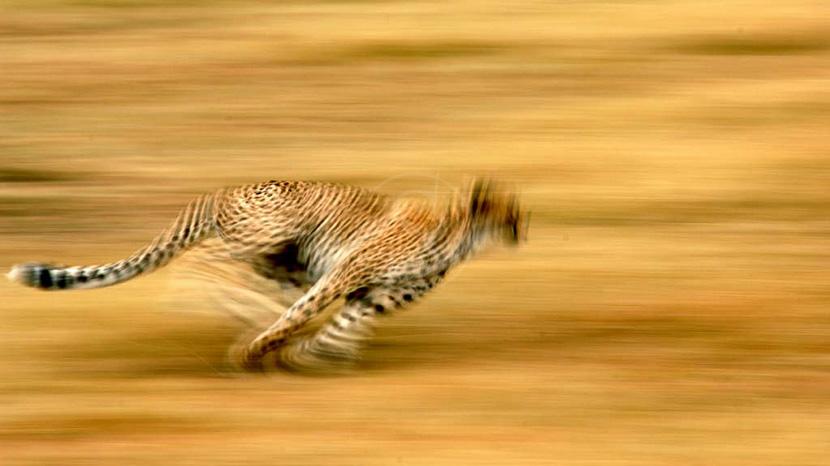 Parc national du Serengeti, Serengeti Camp, Tanzanie © Nomad