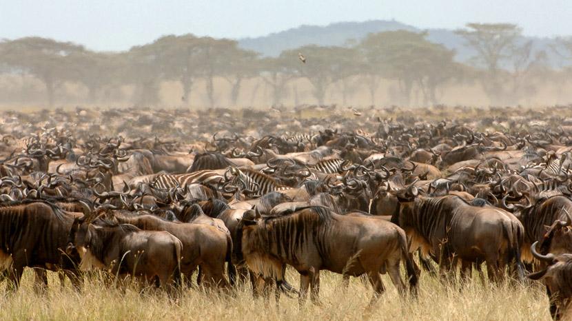 Parc national du Serengeti, Safari en Tanzanie © &Beyond