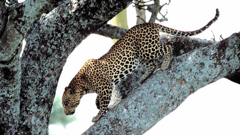 Parc national du Serengeti, Safari dans le Serengeti, Tanzanie