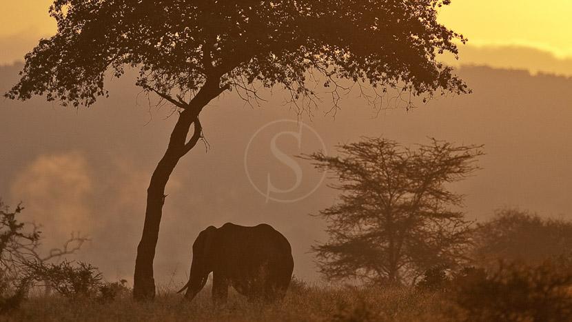 Parc national de Tarangire, Eléphant dans le Tarangire, Tanzanie