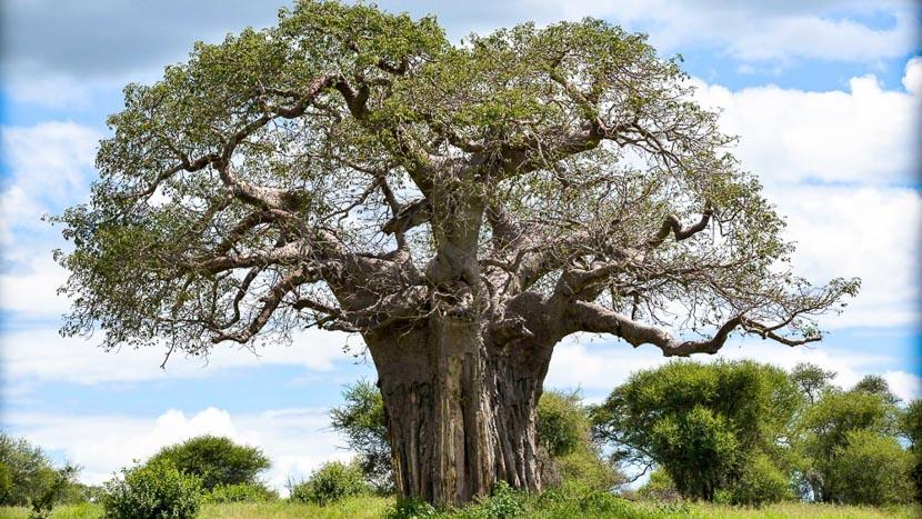 Parc national de Tarangire, Maweninga Camp, Tanzanie