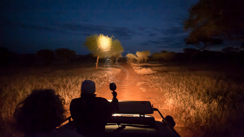 Safaris nocturnes dans le Tarangire, Kuro Tarangire, Tanzanie © Nomad - Paul Joynson Hicks