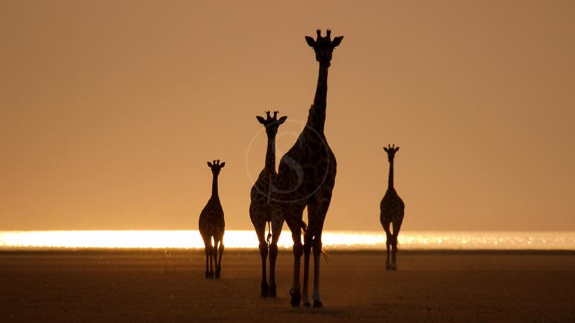 Safaris nocturnes dans le Tarangire, Chem Chem Lodge Tarangire, Tanzanie © Chem Chem