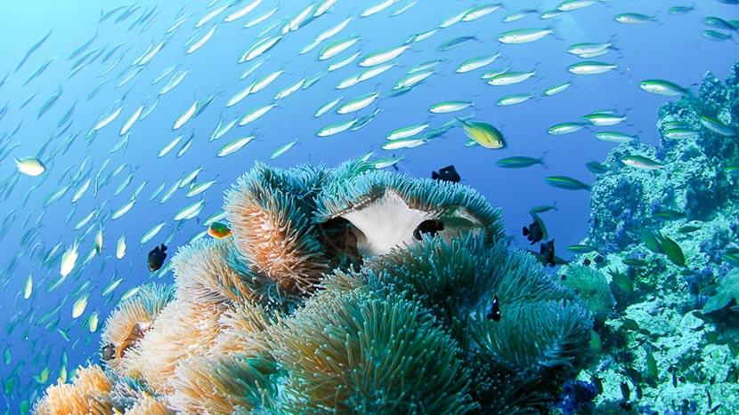 Plongée sous-marine , Chuini Zanzibar Beach Lodge, Tanzanie
