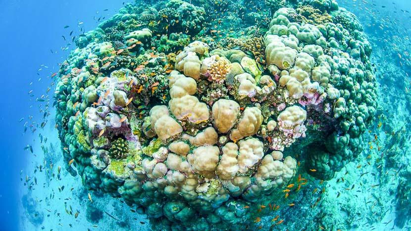 Plongée sous-marine , Manta Resort Pemba, Tanzanie © Manta Resort