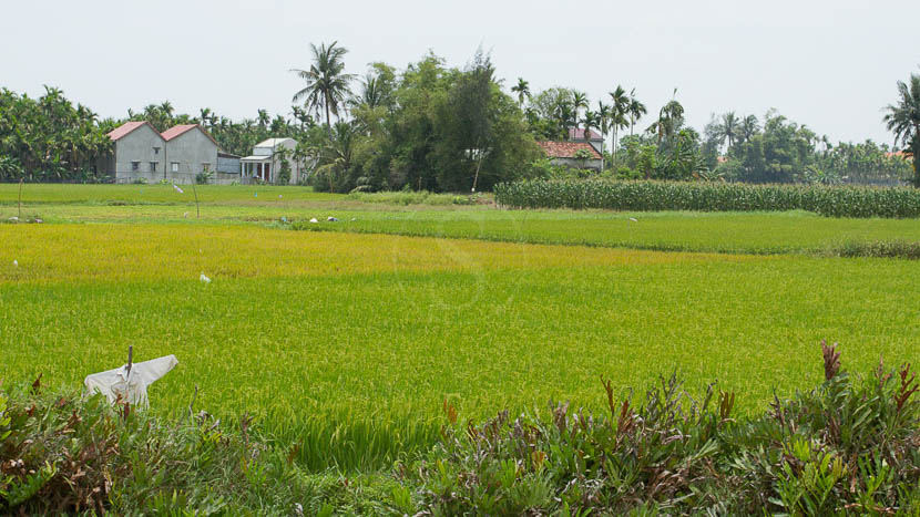 Balade à vélo dans les rizières à Hoi An, Vietnam