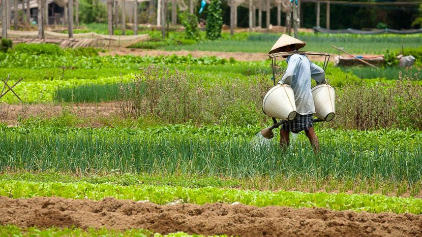 Balade à vélo dans les rizières à Hoi An, Cultures autour de Hoi Han, Vietnam