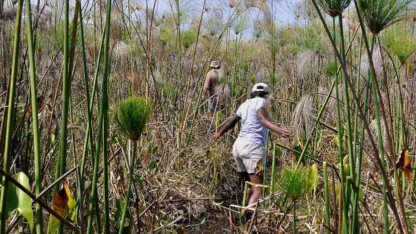 Les marais de Bangweulu et le bec-en-sabot, Bec en sabot dans Bangwelu, Zambie
