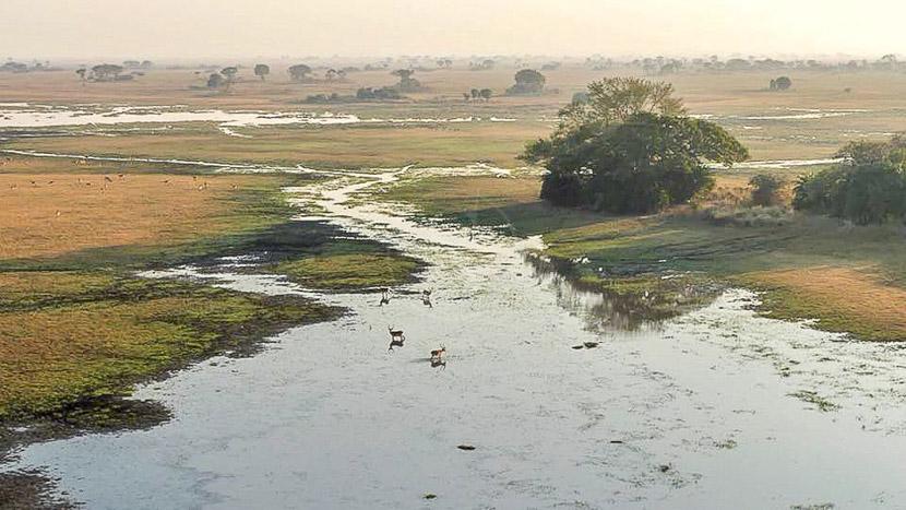 Busanga Plains, Busanga Balloon Safari, Zambie