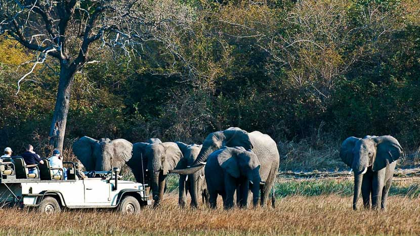 Busanga Plains, Busanga Bush Camp, Zambie © Wilderness Safaris