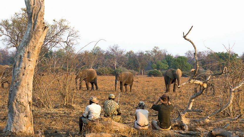 Activités à Kaingo, pour photographes, Kaingo Activites, Zambie