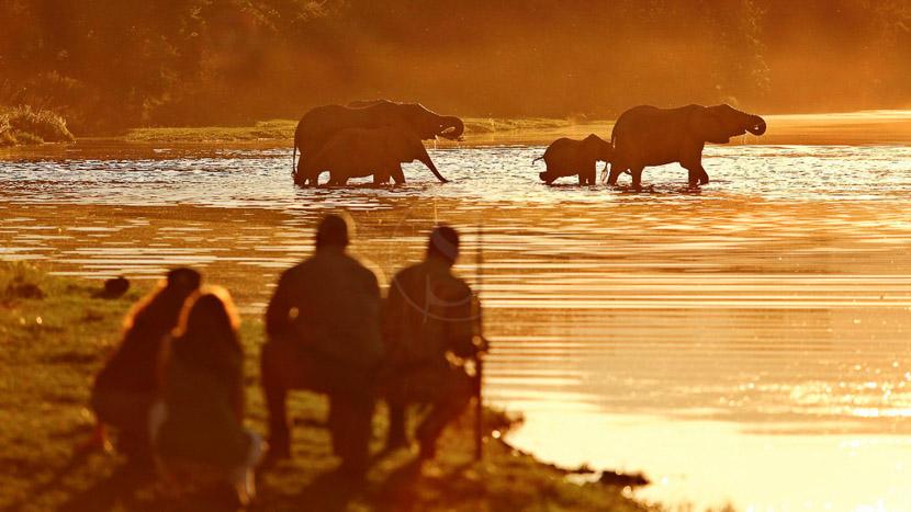Pêche sur le Zambèze, Chongwe River Camp, Zambie © Burrard-Lucas