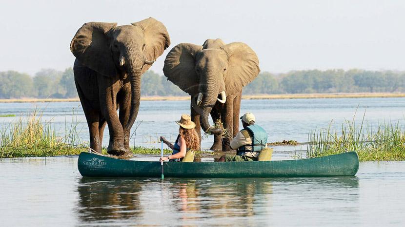 Safari en canoë sur le Zambèze, Safaris à Potato Bush Camp, Zambie © Potato Bush Camp