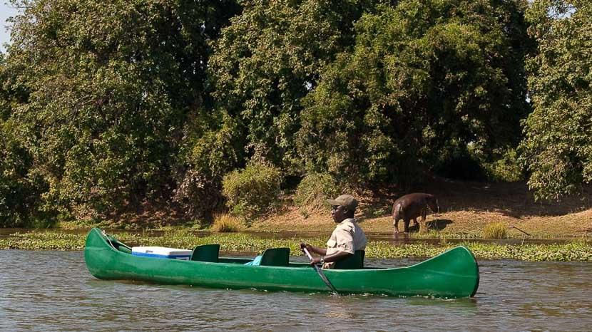 Safari en canoë sur le Zambèze, Safari en canoe sur le Zambèze