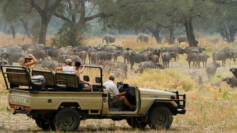 Safari dans le parc national du Lower Zambezi, Tanzanie