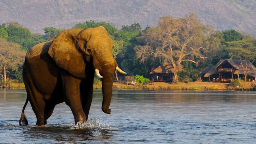 Safari dans le parc national du Lower Zambezi, Chiawa Camp, Zambie