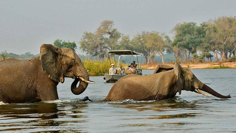 Safari dans le parc national du Lower Zambezi, Sausage Tree, Zambie